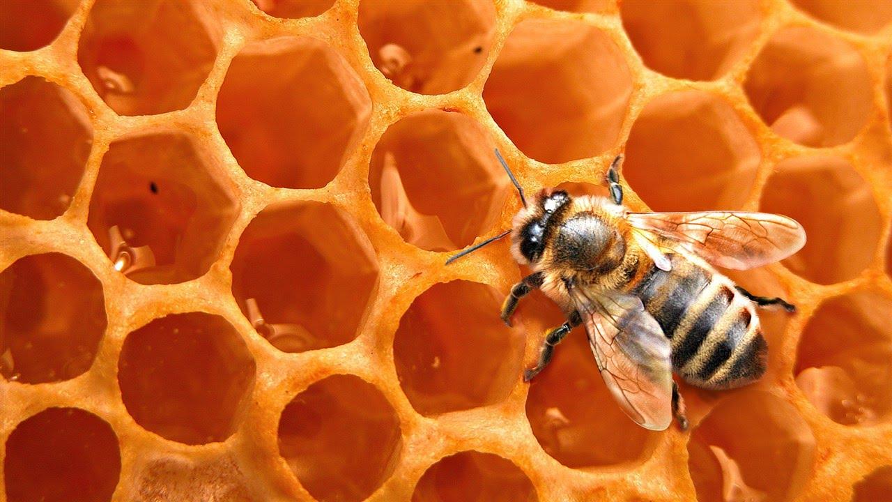 Una abeja en un panal