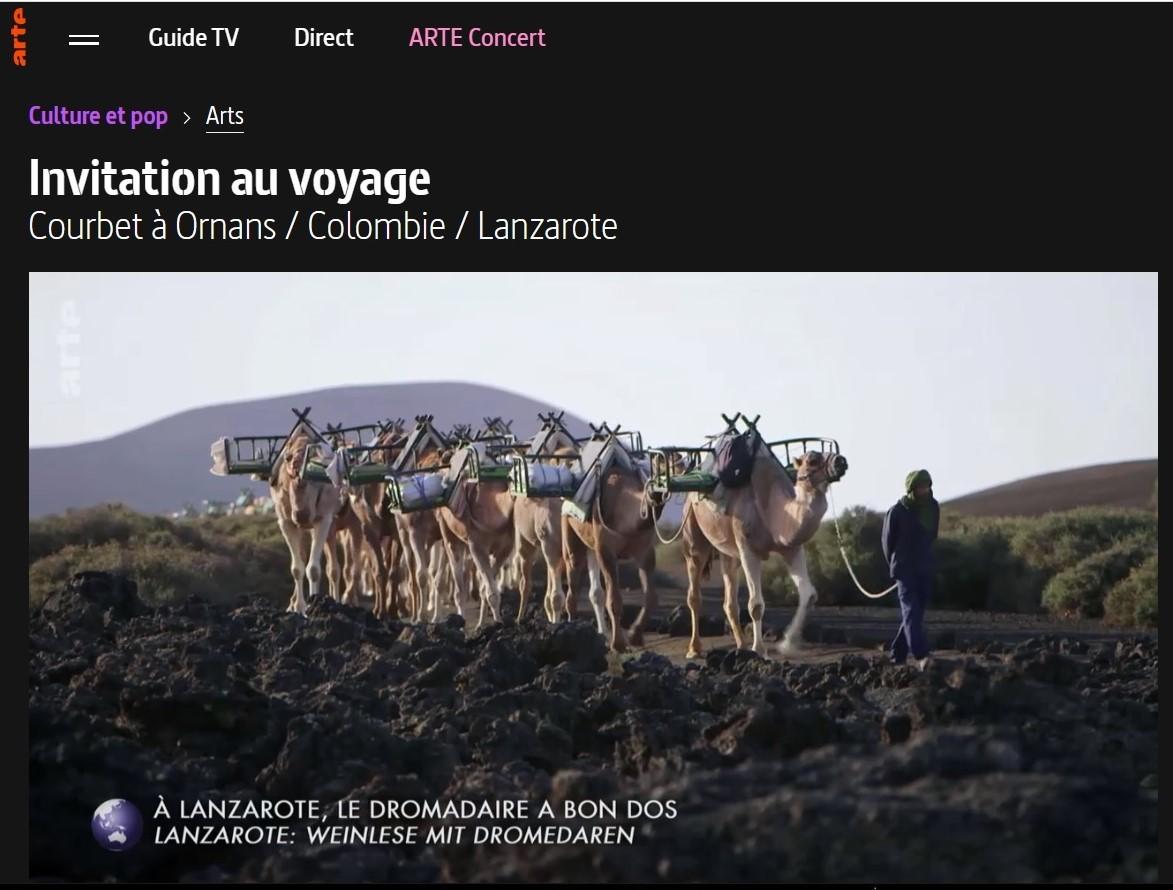 Camellos. Yaiza. Lanzarote