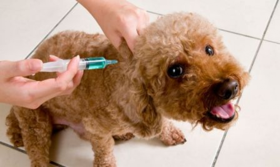 Campaña de vacunación antirrábica de Puerto del Rosario. Fuerteventura