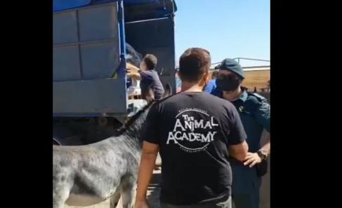 """Piensos del Atlántico dona 1200 kg de mezcla de semillas para el Refugio """"The Animal Academy"""""""