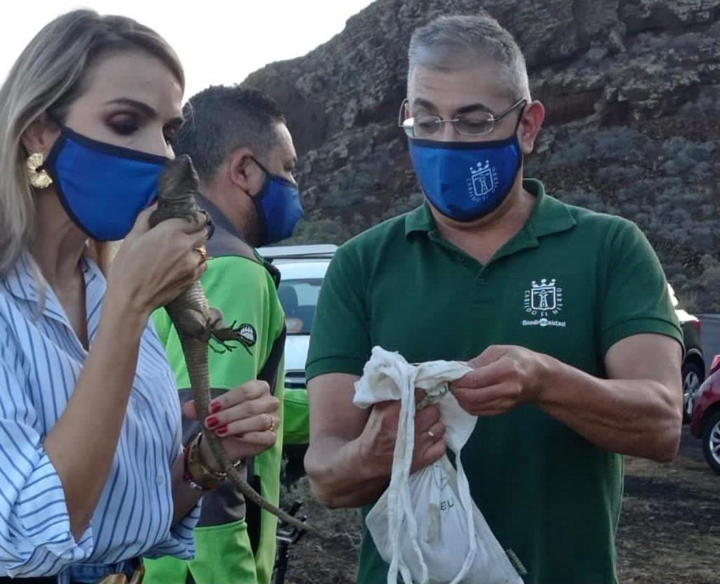 El Cabildo de El Hierro libera 50 Lagartos Gigantes en la Punta de Agache / CanariasNoticias.es
