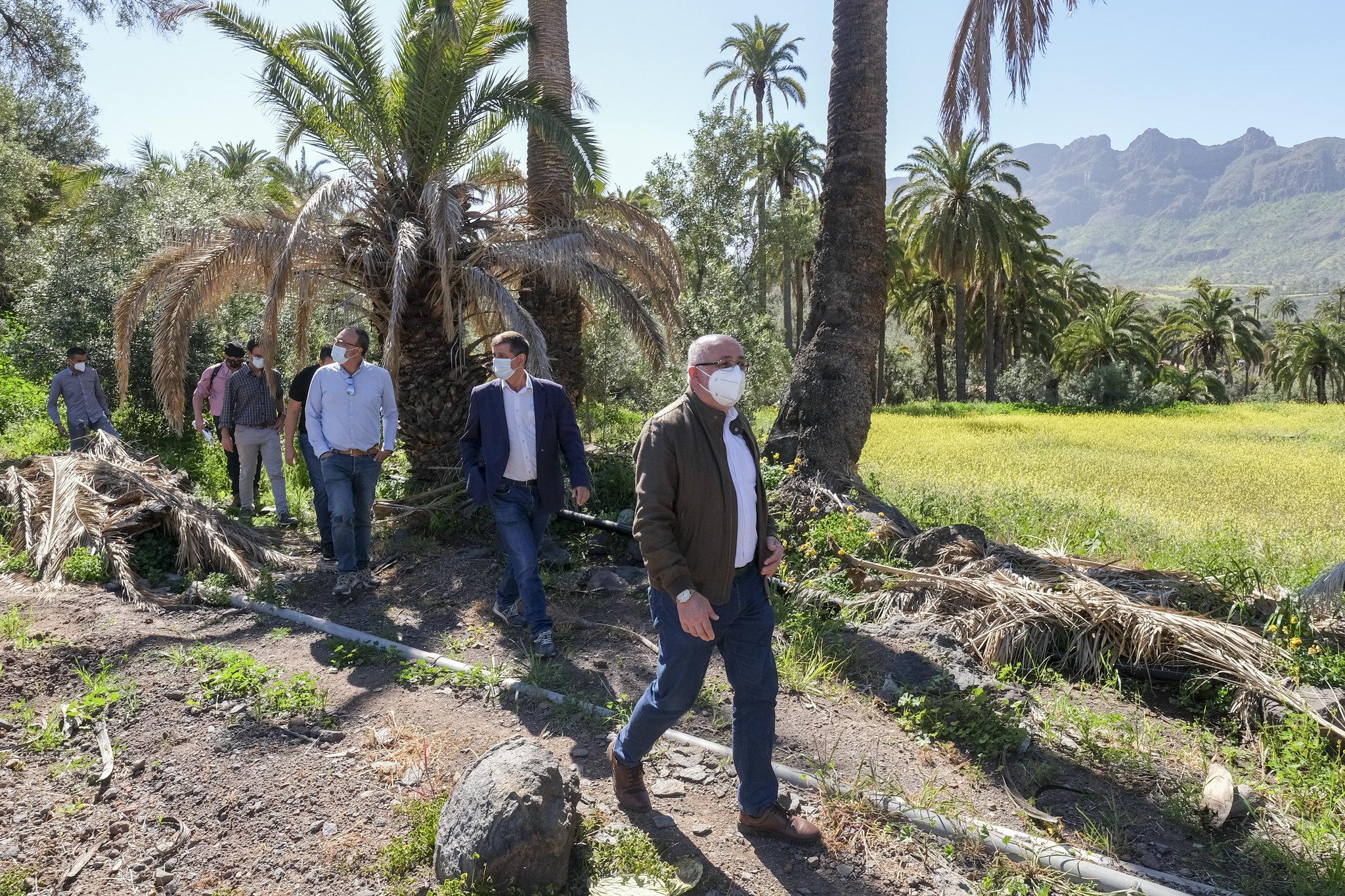 El Cabildo de Gran Canaria limpiará las palmeras y barrancos para prevenir incendios / CanariasNoticias.es