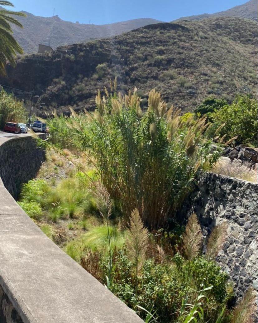 Barranco de El Cercado. El Regente. Anaga. Santa Cruz de Tenerife/ canariasnoticias