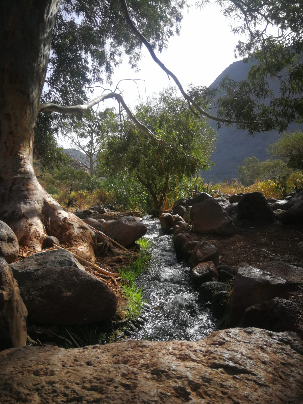 Camino de las Bestias del Barranco de Guayadeque (Gran Canaria) / CanariasNoticias.es