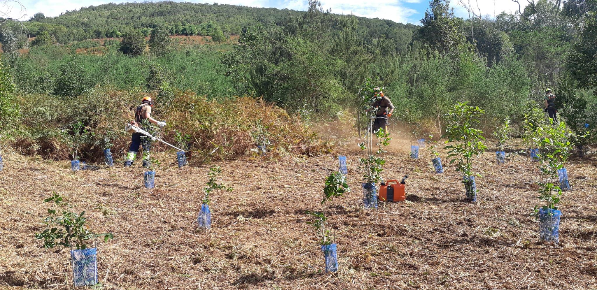 Zona reforestada de Gran Canaria / CanariasNoticias.es