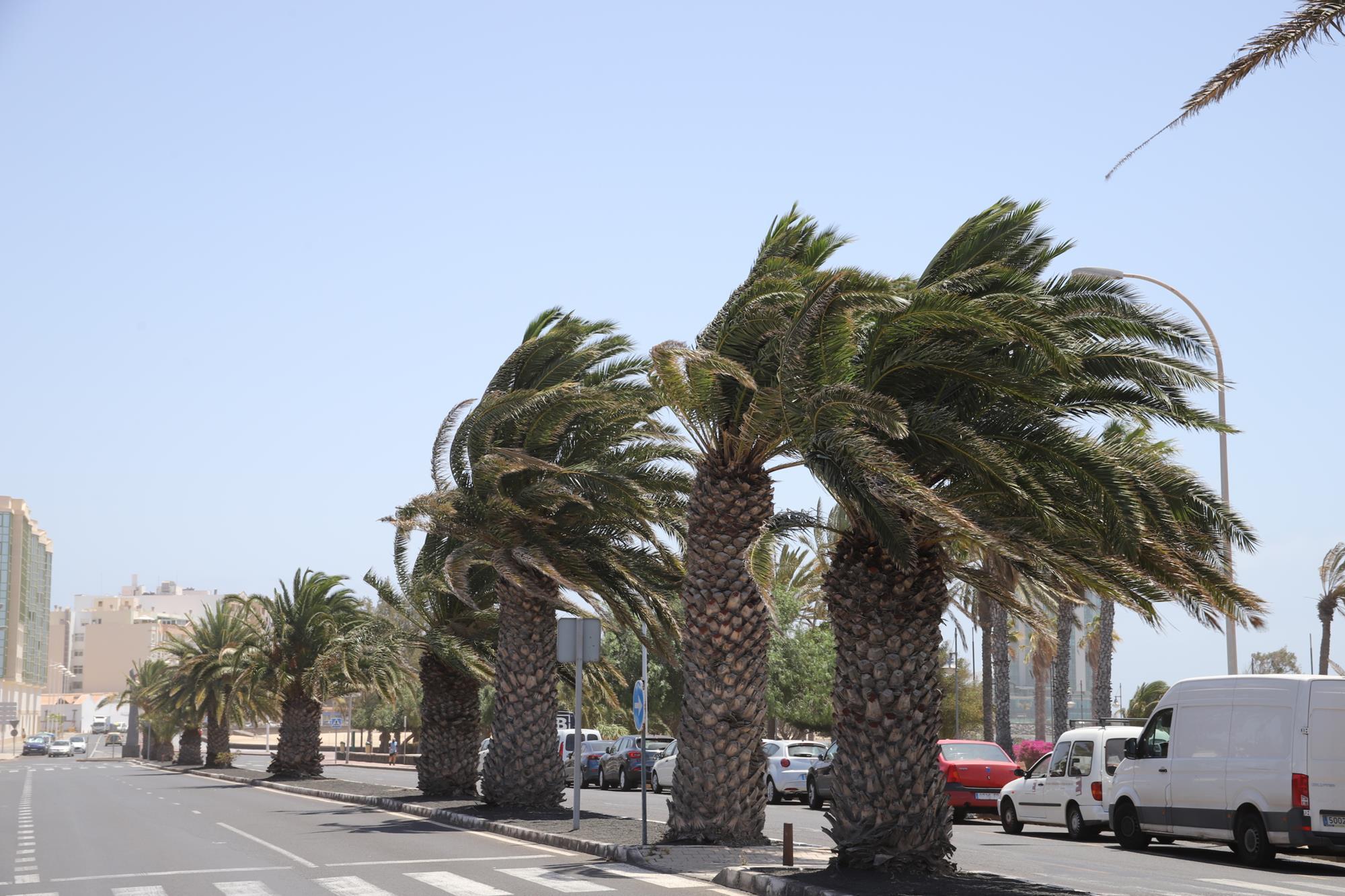 Temporal de viento en Canarias / CanariasNoticias.es