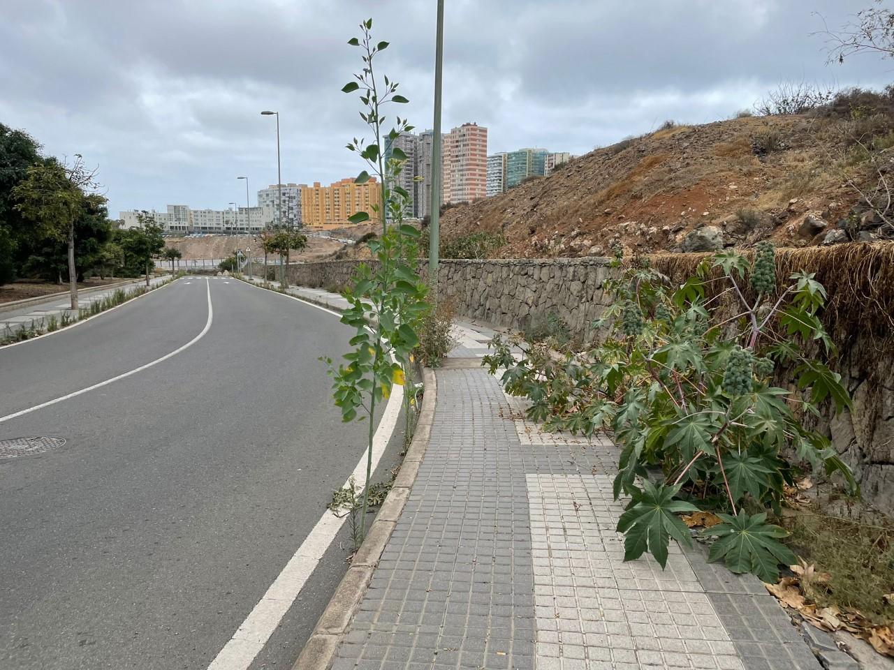Suciedad y abandono en Las palmas de Gran Canaria/ canariasnoticias