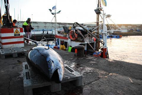 Captura de atún rojo en Mogán