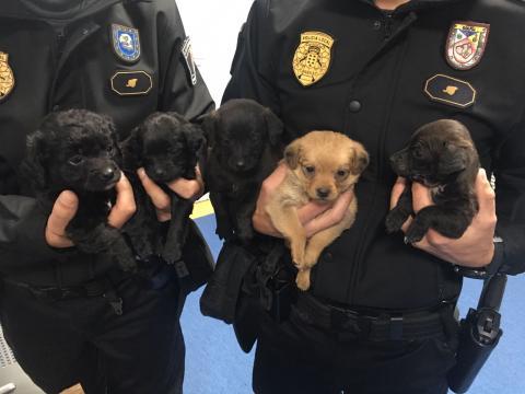 Cachorros recuperados por la Policía Local de Las Palmas de Gran Canaria