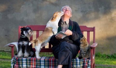 Persona mayor con animales