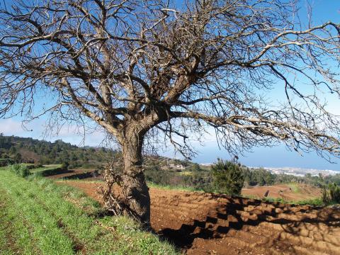 Terrenos en zona agrícola de San Juan de la Rambla
