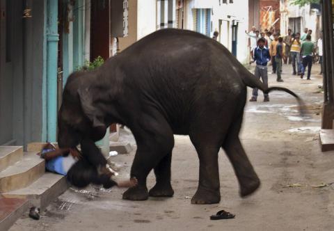 Un elefante atacando a un elefante