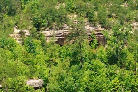 Bosque de Kentucky