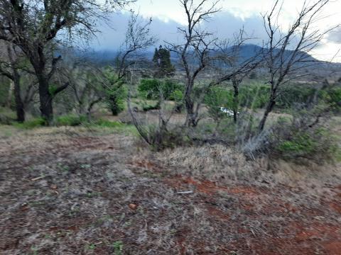 Hacienda El Pino. Almendros. El Paso. La Palma