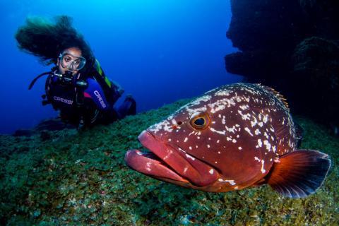 El Hierro conmemora el Día Mundial de Los Océanos 2020