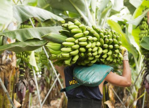 Agricultura. Canarias