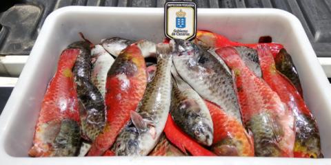 Incautación de pescado. Canarias
