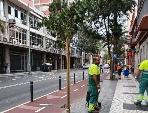 Mejora en espacios verdes y zonas ajardinadas de Las Palmas de Gran Canaria