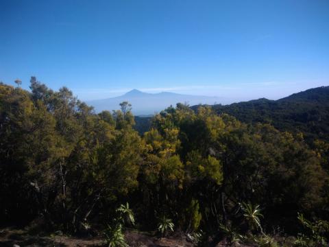 Vistas del Teide desde el alto de Garajonay. La Gomera