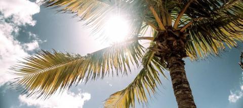 Altas temperaturas. Canarias