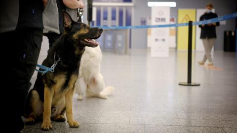 Perros detectan infectados por coronavirus en el aeropuerto de Helsinki, Finlandia