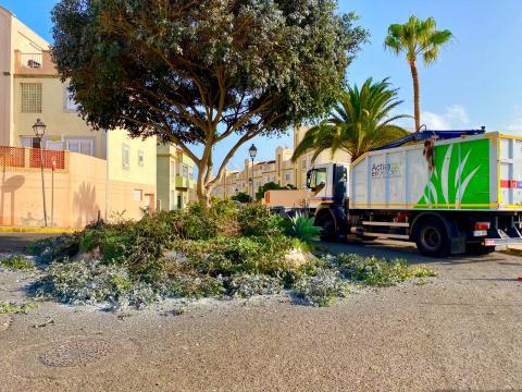 Labores de poda de la arboleda en San Antonio en Telde. Gran Canaria
