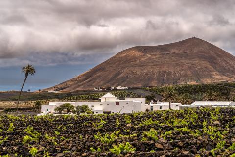 Bodegas El Grifo. Lanzarote