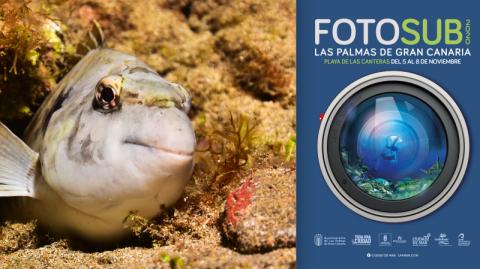 Cartel Fotosub Las Palmas de Gran Canaria 2020