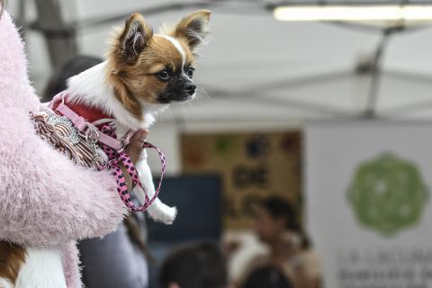 Feria de la Adopción de La Laguna / CanariasNoticias.es