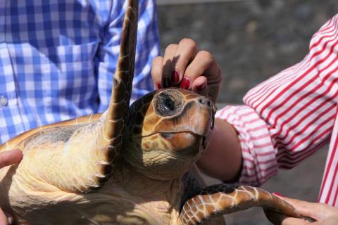 Suelta de tortugas en Valverde, El Hierro / CanariasNoticias.es