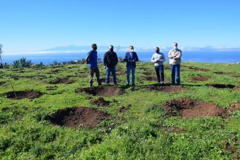 Reforestación de Gáldar / CanariasNoticias.es