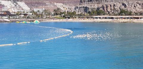Sustancia en la Playa de Amadores (Mogán) / CanariasNoticias.es