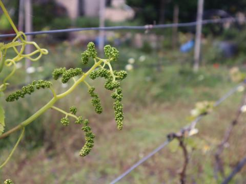 Consejo Regulador de Vinos de Gran Canaria / CanariasNoticias.es