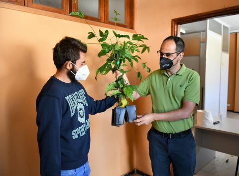 Mogán entrega plantas de maracuyá a 65 agricultores / CanariasNoticias.es