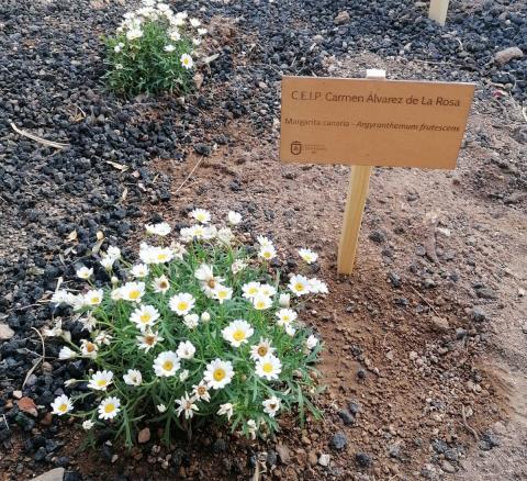 Jardines canarios en los colegios de Candelaria (Tenerife) / CanariasNoticias.es