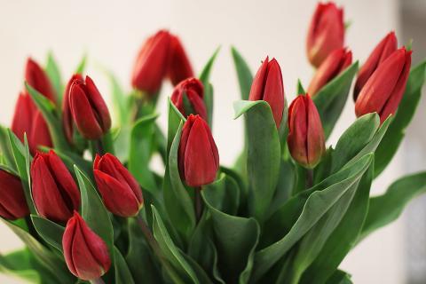 ¿Conocías el arte de prensar flores? ¡Te lo contamos todo!