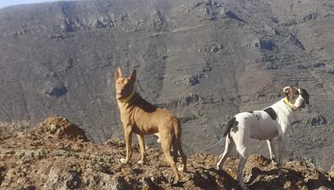 Perros de Caza/ canariasnoticias