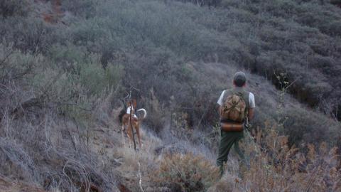 Se levanta la veda para la temporada de caza en Gran Canaria / CanariasNoticias.es