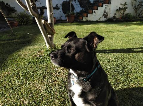 ¿Qué es un cuidador de perros? ¿Cómo convertirse en canguro de perros? ¿Cómo funciona?