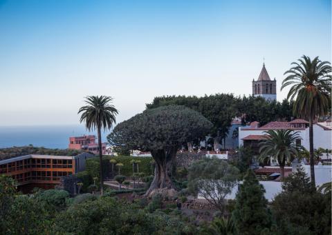 Centro de Interpretación de El Drago en Icod de los Vinos (Tenerife) / CanariasNoticias.es
