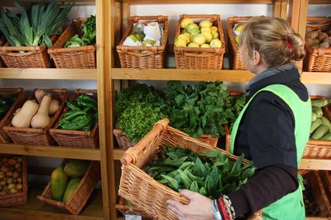 """Mercado Ecológico """"EcoValles"""" de Valleseco / CanariasNoticias.es"""
