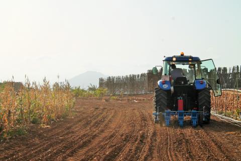 Antigua comienza la siembra de 4.000 kilos de trigo / CanariasNoticias.es