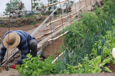 Explotación agrícola en Canarias / CanariasNoticias.es