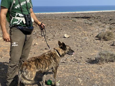 Búsqueda y detección de veneno en Cofete (Fuerteventura)
